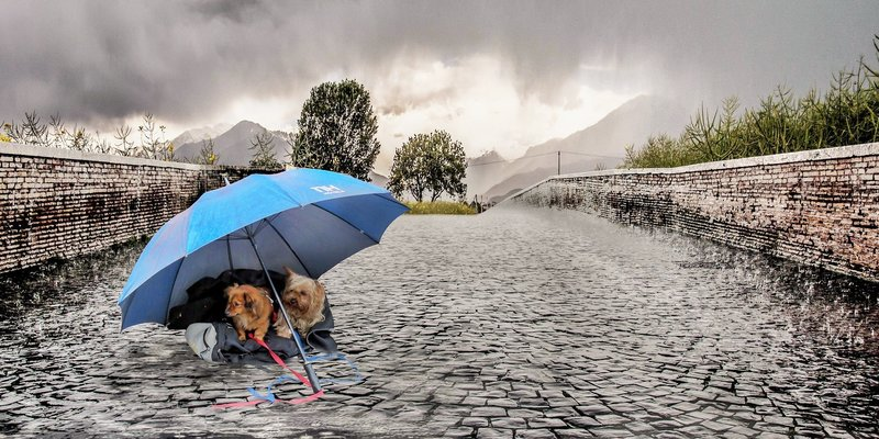Umbrella dogs