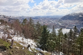 Scenic views from Mt Floyen